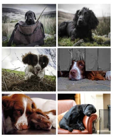 Working Dogs Placemats
