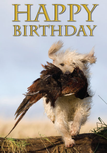 Labradoodle Happy Birthday Card