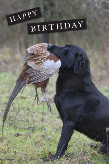 Labrador With Pheasant Happy Birthday Card