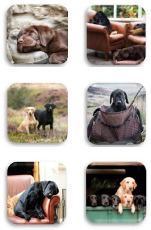 Labrador Coasters