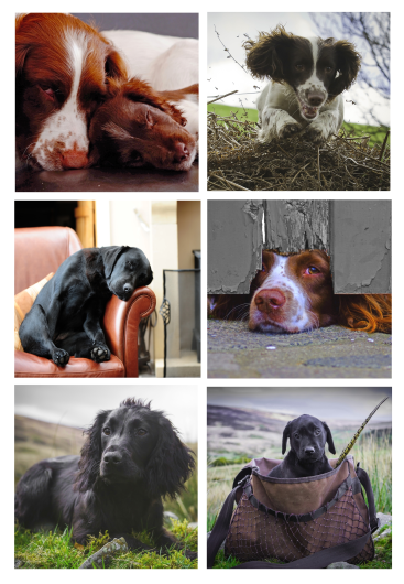 Greetings Cards - Working Dogs