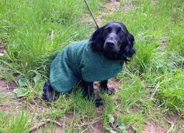 Towelling Dog Coat