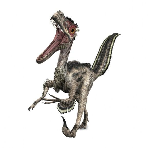 Velociraptor - iStock_000056300618_Medium