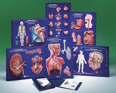 Human Body System Master set of 6