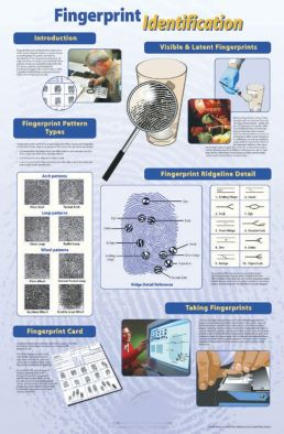 Poster: Fingerprint Identification (Laminated)
