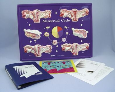 Menstrual Cycle Model Activity Set