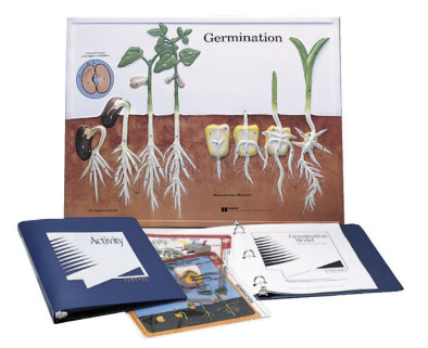 Germination Model Activity Set