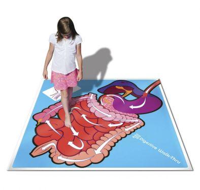 Digestive System Walk Thru