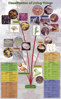 Poster: Classification of Living Things (Laminated)