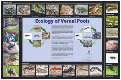 Poster: Ecology of Vernal Pools (Laminated)