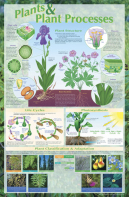 Poster: Plants & Processes (Laminated)
