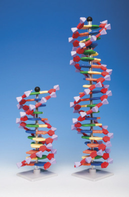 Molecular model kit, Ten layer DNA