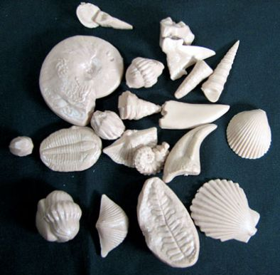Model: Fossil Reproductions Earth History Model 5sets 21