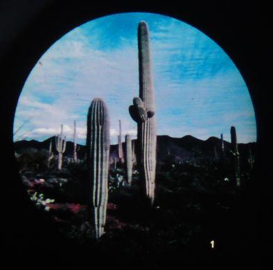 Microslide Life In The Desert (Pk10)