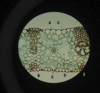Microslide-The Cell Structure (Pk10)