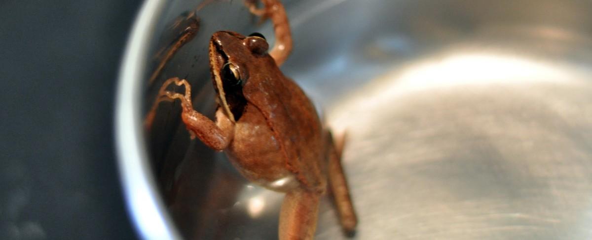 Frog and Saucepan