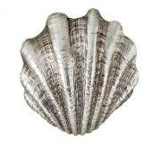 shell wall light copy