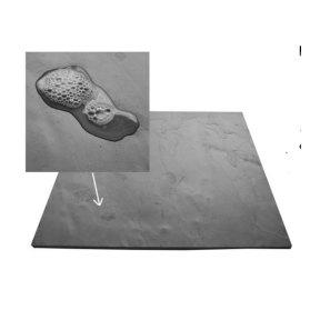 slate-image-2