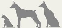 Senior_Dog