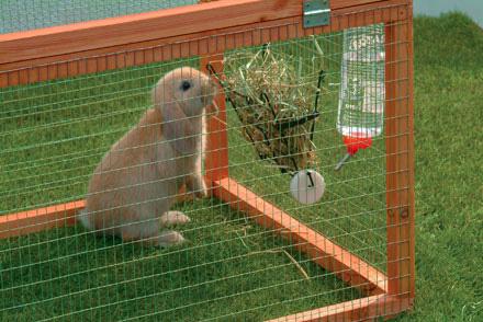 rabbit-diet