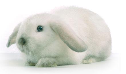 rabbit-care