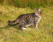 Overweight cat 2