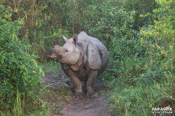 Rhino #1