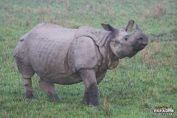 Rhino #2