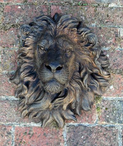 Umber Lions Head