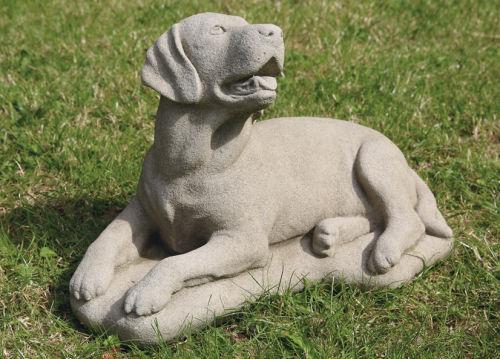 Large Labrador