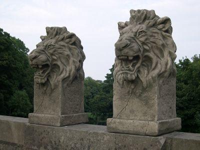 Pair of Etosha Lions