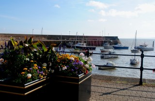 Minehead harbour flowers