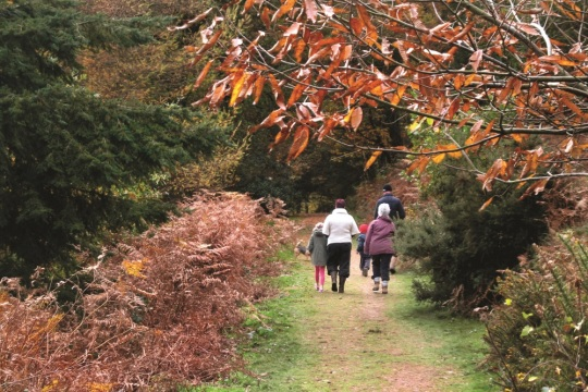 Walkers in the Quantock Hills AONB