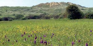 Wildlife of the Estuary, Marsh and Dunes Walk
