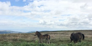 Free Things to Do in & around Exmoor this Summer