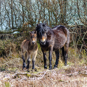 Exmoor wildlife