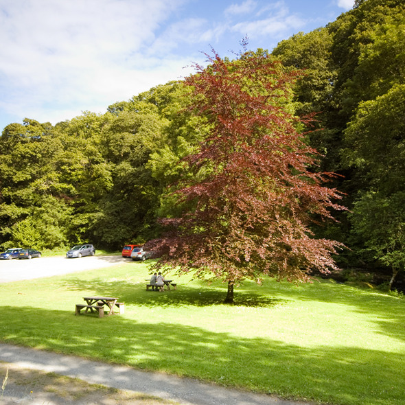 Combe Park, near Lynmouth