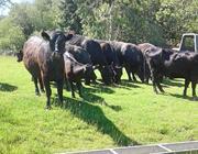 Afternoon Farm Tour
